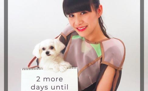 あーちゃん(西脇綾香)の愛犬ぽぽたんが可愛い!初代ポムは3ヶ月で死去?ウチガヤ